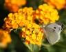 stanko-blueten-mariposa